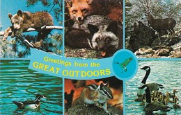 Greetings From The Outdoors Bear Cub Fox Buck Deer Wood Duck Chipmunk & Canadian Geese - Greetings From...