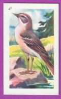 """Image Histoire Naturelle """" ENTREMETS FRANCORUSSE """" N° 473 Oiseau LE PIPIT SPONCIELLE Pour L'Album N° 4 - Alte Papiere"""