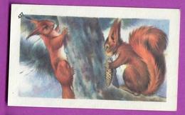 """Image Histoire Naturelle """" ENTREMETS FRANCORUSSE """" N° 477 LES ÉCUREUILS Squirrel  Pour L'Album N° 4 - Vieux Papiers"""