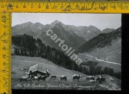 Bergamo Valle Brembana Foppolo - Bergamo