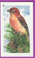"""Image Histoire Naturelle """" ENTREMETS FRANCORUSSE """" N° 482 Oiseau LE BEC CROISÉ Pour L'Album N° 4 - Alte Papiere"""