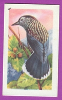 """Image Histoire Naturelle """" ENTREMETS FRANCORUSSE """" N° 486 Oiseau LE CASSE - NOIX Pour L'Album N° 4 - Alte Papiere"""