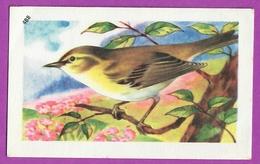 """Image Histoire Naturelle """" ENTREMETS FRANCORUSSE """" N° 488 Oiseau LE POUILLOT VÉLOCE Pour L'Album N° 4 - Vecchi Documenti"""