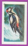 """Image Histoire Naturelle """" ENTREMETS FRANCORUSSE """" N° 490 Oiseau LE PIC EIPECHE Pour L'Album N° 4 - Vecchi Documenti"""