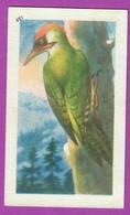 """Image Histoire Naturelle """" ENTREMETS FRANCORUSSE """" N° 491 Oiseau LE PIC VERT Pour L'Album N° 4 - Vecchi Documenti"""