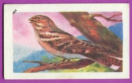 """Image Histoire Naturelle """" ENTREMETS FRANCORUSSE """" N° 494 Oiseau L' ENGOULEVENT Pour L'Album N° 4 - Vecchi Documenti"""