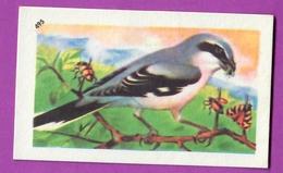 """Image Histoire Naturelle """" ENTREMETS FRANCORUSSE """" N° 495 Oiseau LA PIE GRIÈCHE GRISE Pour L'Album N° 4 - Vecchi Documenti"""