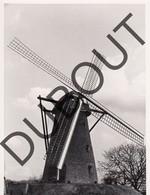 Meerle Molen/Moulin Originele Foto E3 - Hoogstraten