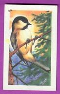 """Image Histoire Naturelle """" ENTREMETS FRANCORUSSE """" N° 502 Oiseau LA MESANGE ALPESTRE Pour L'Album N° 4 - Vecchi Documenti"""