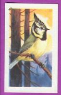 """Image Histoire Naturelle """" ENTREMETS FRANCORUSSE """" N° 503 Oiseau LA MESANGE HUPPÉ Pour L'Album N° 4 - Alte Papiere"""