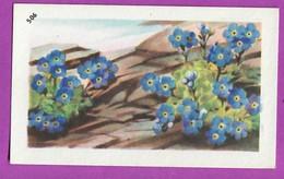 """Image Histoire Naturelle """" ENTREMETS FRANCORUSSE """" N° 506 Fleur LA ROI DES ALPES Pour L'Album N° 4 - Documentos Antiguos"""