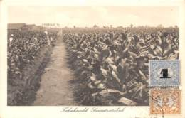 Indonésie / Belle Oblitération - 93 - Tabaksveld Sumatratabak - Indonésie