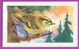 """Image Histoire Naturelle """" ENTREMETS FRANCORUSSE """" N° 513 Oiseau LE ROITELET HUPPÉ Pour L'Album N° 4 - Alte Papiere"""