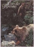 CPM - OURS Des PYRENEES - Edition Loubatières - Bears