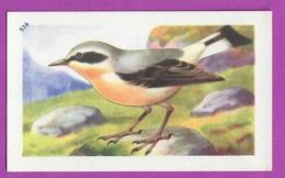 """Image Histoire Naturelle """" ENTREMETS FRANCORUSSE """" N° 516 Oiseau LE TRAQUET MOTTEUX Pour L'Album N° 4 - Vecchi Documenti"""