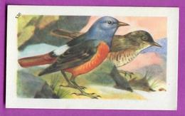"""Image Histoire Naturelle """" ENTREMETS FRANCORUSSE """" N° 530 Oiseau LE MERLE DE ROCHE  Pour L'Album N° 4 - Vecchi Documenti"""