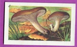 """Image Histoire Naturelle """" ENTREMETS FRANCORUSSE """" N° 544 Champignon LA PLEUROTE DU PANICAUT  Pour L'Album N° 4 - Old Paper"""