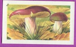 """Image Histoire Naturelle """" ENTREMETS FRANCORUSSE """" N° 545 Champignon LE RUSSULE OLIVACÉ  Pour L'Album N° 4 - Old Paper"""