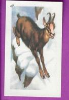 """Image Histoire Naturelle """" ENTREMETS FRANCORUSSE """" N° 552 Animal LE CHAMOIS Pour L'Album N° 4 - Vecchi Documenti"""