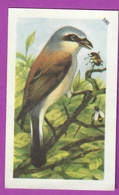 """Image Histoire Naturelle """" ENTREMETS FRANCORUSSE """" N° 598 Oiseau LA PIE GRIÈCHE ÉCORCHEUR Pour L'Album N° 5 - Alte Papiere"""
