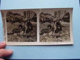 BIARRITZ : Roche à Marée Basse Prise Du Basta : S. 52 - 3363 ( Maison De La Bonne Presse VUES De FRANCE ) Stereo Photo - Stereoscopic