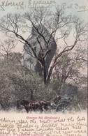 RHODESIA. MATOPO HILL. T.D. RAVENSCROFT. CIRCULEE 1906 A S. BATON MASS-RARE- BLEUP - Zimbabwe