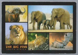 ZA. THE BIG FIVE. SOUTH AFRICA. Leeuw - Panter - Olifant - Neushoorn - Buffel. - Zuid-Afrika