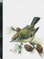 Carte Blanco: Roitelet Huppé  -  Goudhaantje - 1985-.. Pájaros (Buzin)