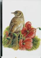 Carte Blanco: Alouette Des Champs  -  Veldleeuwerik - 1985-.. Pájaros (Buzin)