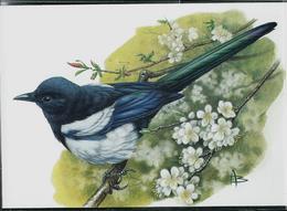 Carte Blanco: Pie Bavarde - Ekster - 1985-.. Pájaros (Buzin)