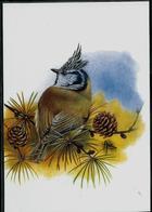 Carte Blanco: Mésange Huppée  -  Kuifmees - 1985-.. Pájaros (Buzin)