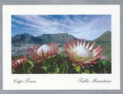 ZA. CAPE TOWN. TABLE MOUNTAIN. SOUTH AFRICA. NATIONAL FLOWER PROTEA CYNAROIDES. - Zuid-Afrika