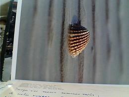 BIGLIETTO OSIMO LEGA FILO D'ORO CONCHIGLIA SHELL   N1990 GX5778 - Postcards