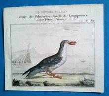 Le Pétrel Fulmar, Ordre Des Palmipèdes , Famille Des Longipennes - Stampe & Incisioni