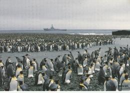 CPM - TAAF - Patrouilleur Albatros Et Manchots Royaux - Anse Du Naufragé Ile De L'Est - CROZET - TAAF : Terres Australes Antarctiques Françaises