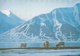CPM - TAAF - RENNES  Introduits à KERGUELEN En 1955 Et 1956 - TAAF : French Southern And Antarctic Lands