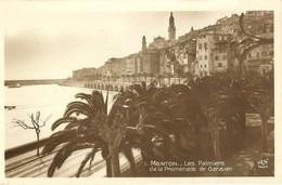 CPA - A.M. - MENTON, Les Palmiers De La Promenade De Garavan - Menton