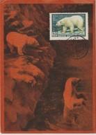 URSS Carte Maximum 1957 Animaux Ours Blanc 1904A - 1923-1991 URSS