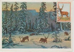 URSS Carte Maximum 1957 Animaux Cerf 1905 - 1923-1991 URSS