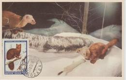 URSS Carte Maximum 1957 Animaux Zibeline 1908 - 1923-1991 URSS