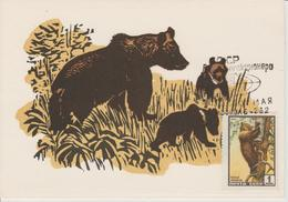 URSS Carte Maximum 1961 Animaux Ours 2381 - 1923-1991 URSS