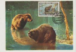 URSS Carte Maximum 1961 Animaux Castor 2382 - 1923-1991 URSS