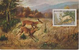 URSS Carte Maximum 1961 Animaux Chevreuil 2383 - 1923-1991 URSS