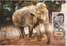 URSS Carte Maximum 1964 Animaux Eléphant 2821 - 1923-1991 URSS