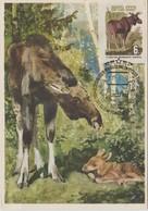 URSS Carte Maximum 1964 Animaux Elan 2824 Non Dentelé - 1923-1991 URSS