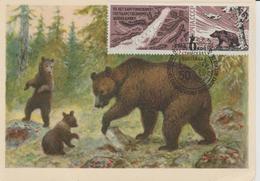URSS Carte Maximum 1966 Animaux Ours 3116 - 1923-1991 URSS