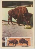 URSS Carte Maximum 1969 Animaux Bison 3530 - 1923-1991 URSS