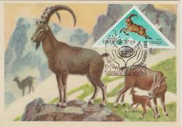 URSS Carte Maximum 1973 Animaux 3946 - 1923-1991 URSS