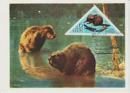 URSS Carte Maximum 1973 Animaux Castor 3948 - 1923-1991 URSS