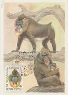 URSS Carte Maximum 1984 Animaux Singe 5075 - 1923-1991 URSS
